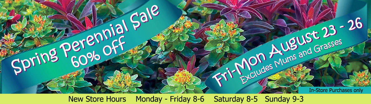 Dundalk Florist Perennial Sale.  All Spring Perennials 60% Off