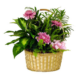 Lush Green Basket