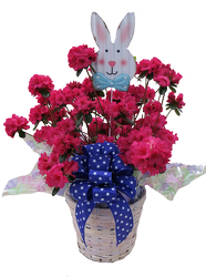 DFP428 Azalea Plant with Basket Cover