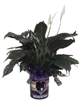 Raven Small Tin w/peace lily plant