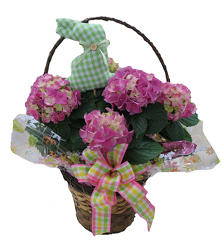 DFP467 Hydrangea Plant in Basket Cover