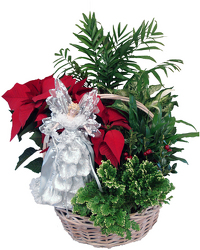 DFP746 Handle Basket w/foliage and poinsettia & Angel Topper