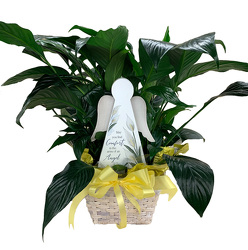 DFP926 Peace Lily Plant in Basket w/ Comfort Wooden Angel