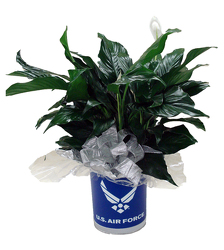 DFPF5 Air Force Tin container w/peace lily plant