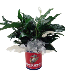 DFPM5 Marine Tin container with Peace Lily Plant