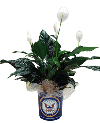 DFPN5 Navy Tin Container with Peace Lily Plant