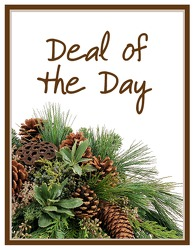 TMF-DODW Deal of the Day - Winter