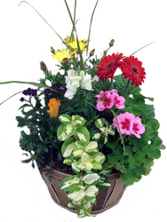 Basket of Spring Blooming Plants