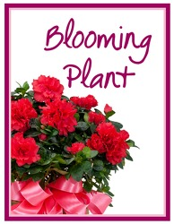 TMF-BP Blooming Plant Deal of the Day