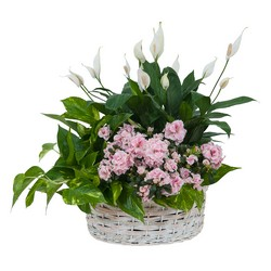 TMF-633 Living Blooming  White Garden Basket